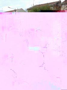 mimosa-scuola-4